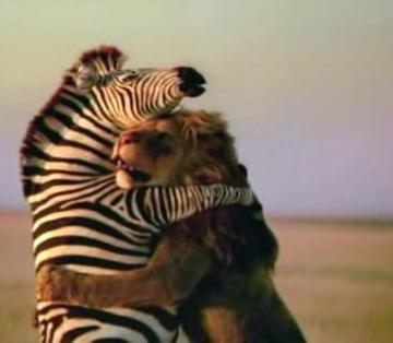 ARG - Zebras Hugs